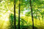 Pastatų termoizoliacinių medžiagų žalieji pirkimai – kas bus pirmas?